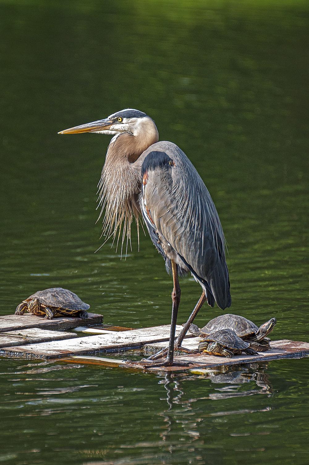 gray bird on water