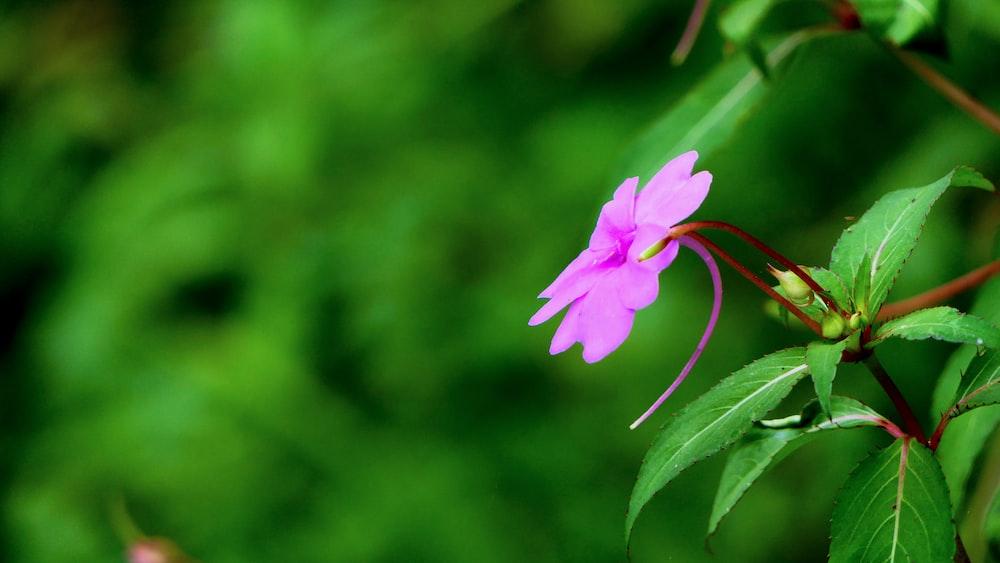 selective focus photo of purple flower
