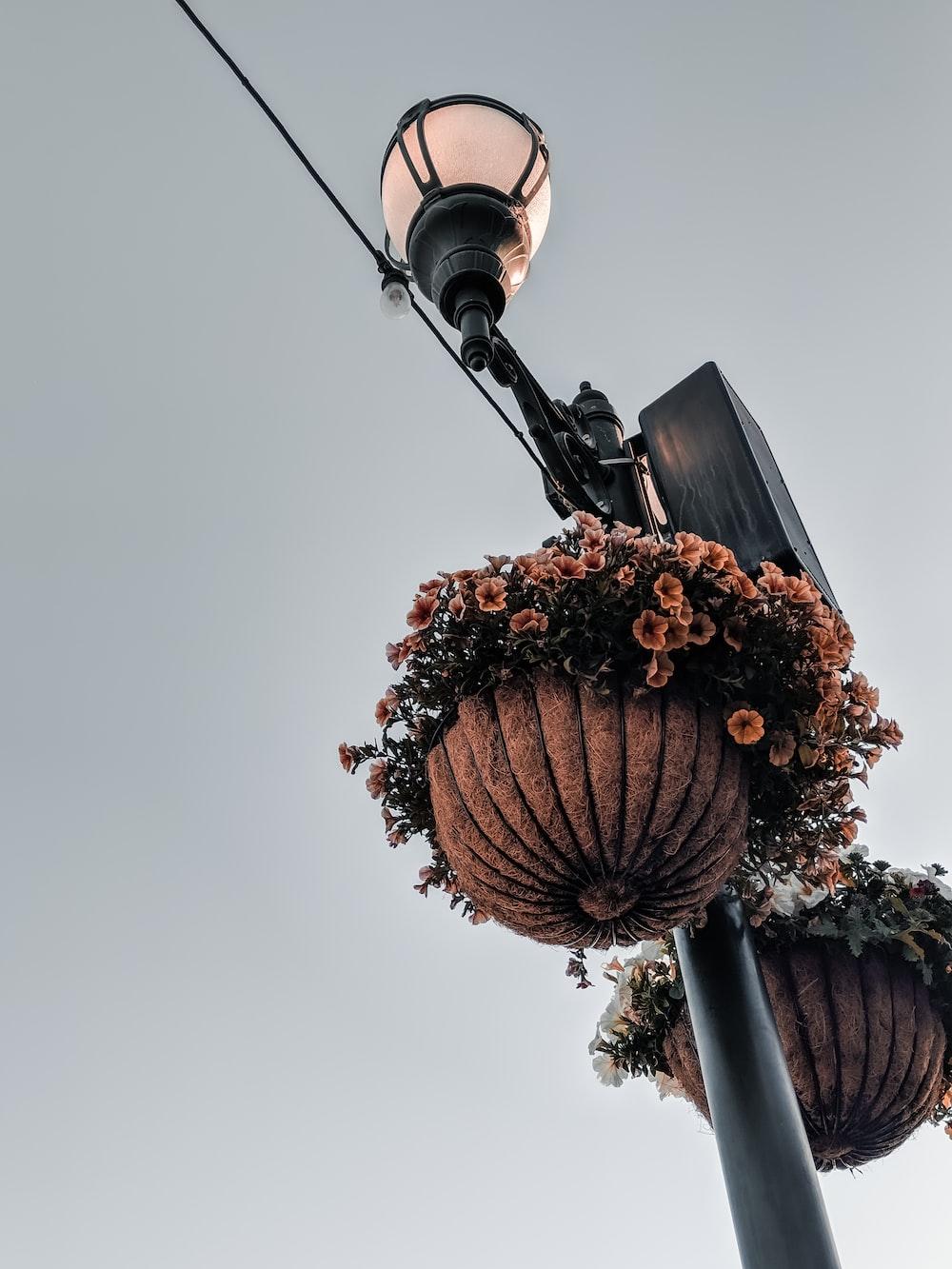 orange petaled flowers near lamp post
