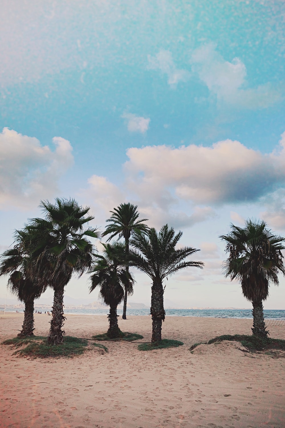 coconut palm trees on shore at daytime