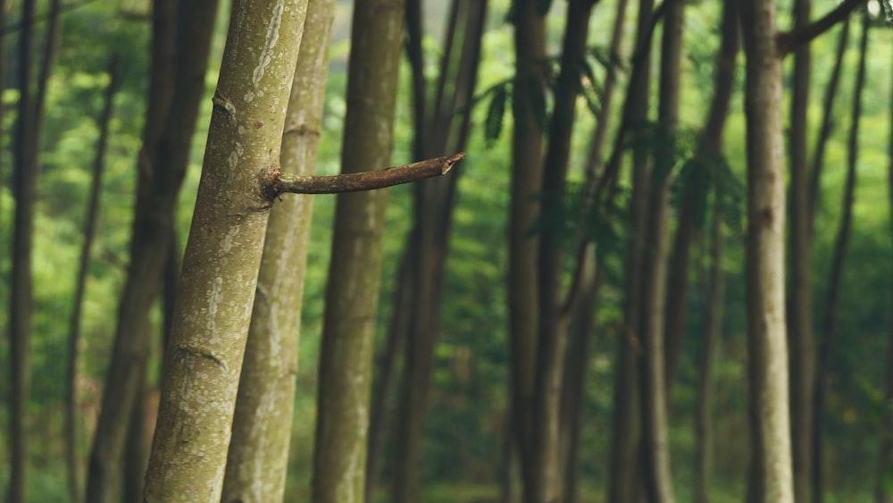 macro photography of green trees