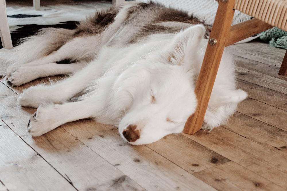 short-coated white dog close-up photography