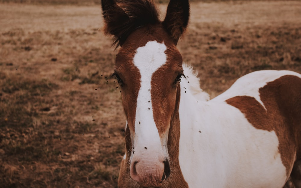 white and brown horse outdoor during daytime