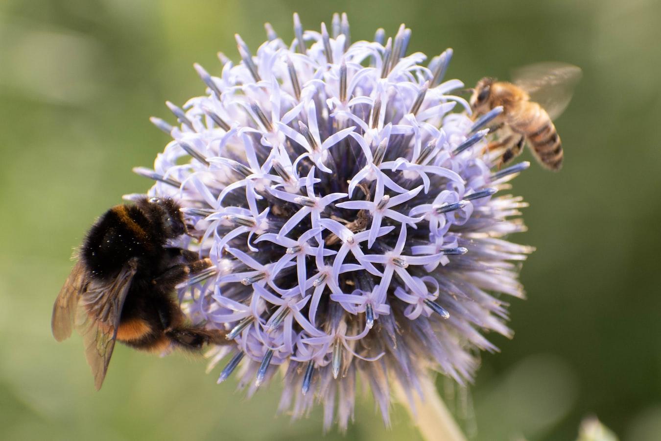 Böcek sayıları 1990'dan bu yana %25 azaldı