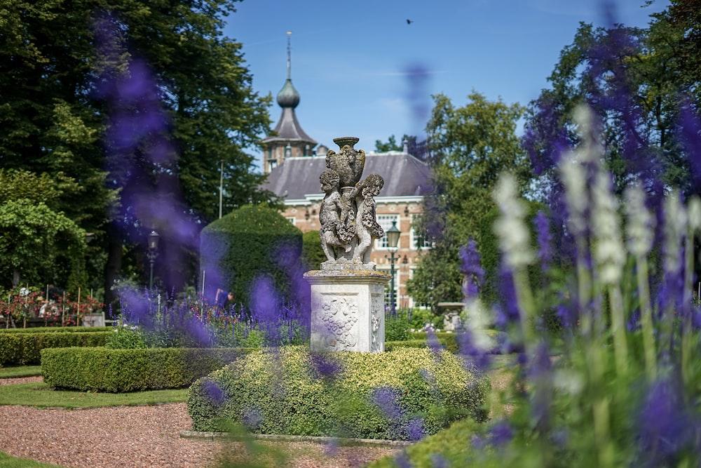 purple lavender near white house during daytime