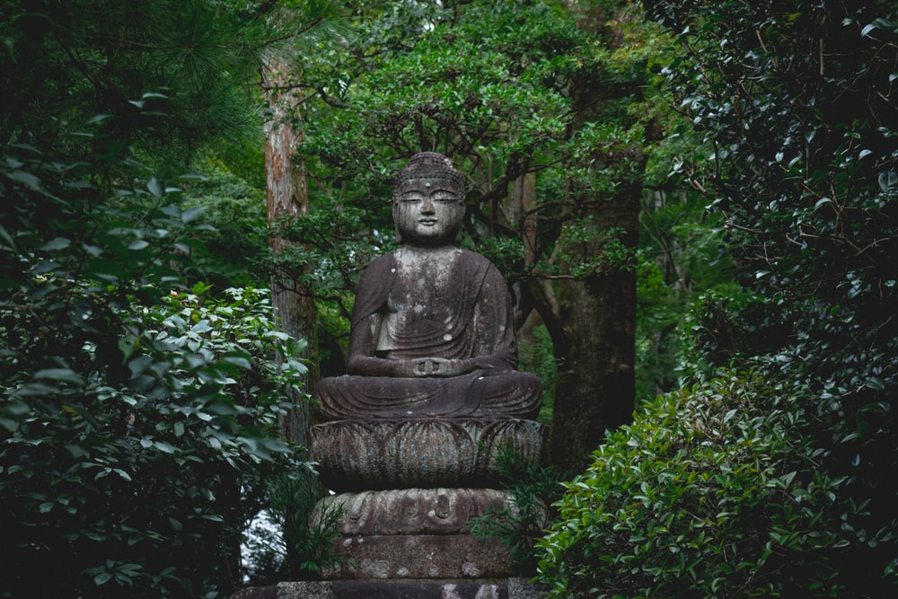 Buddha statue near trees