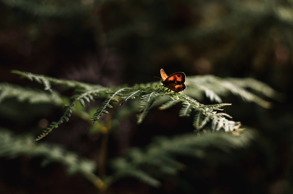 copper butterfly perching on fern
