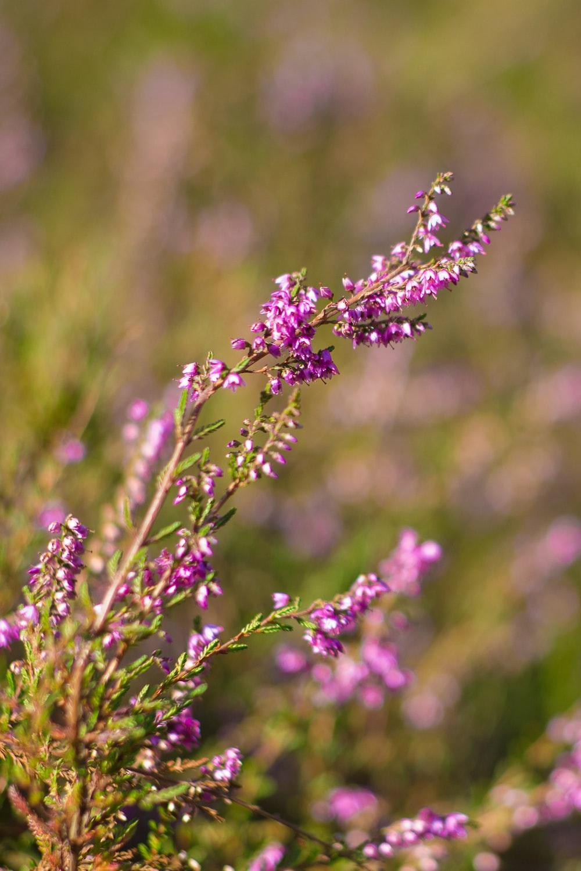 purple flower bloom during daytime