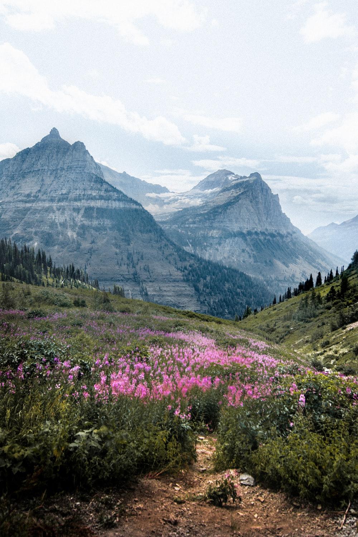 pink petaled flower near mountain during daytime