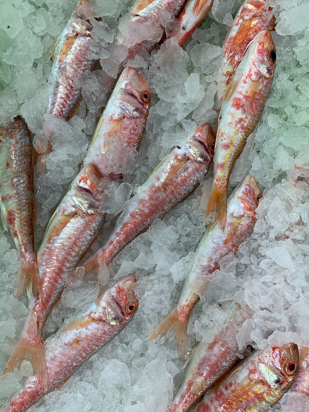 Red mullet on display in our local supermarket in Spain.