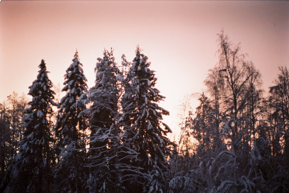 grey trees during daytime