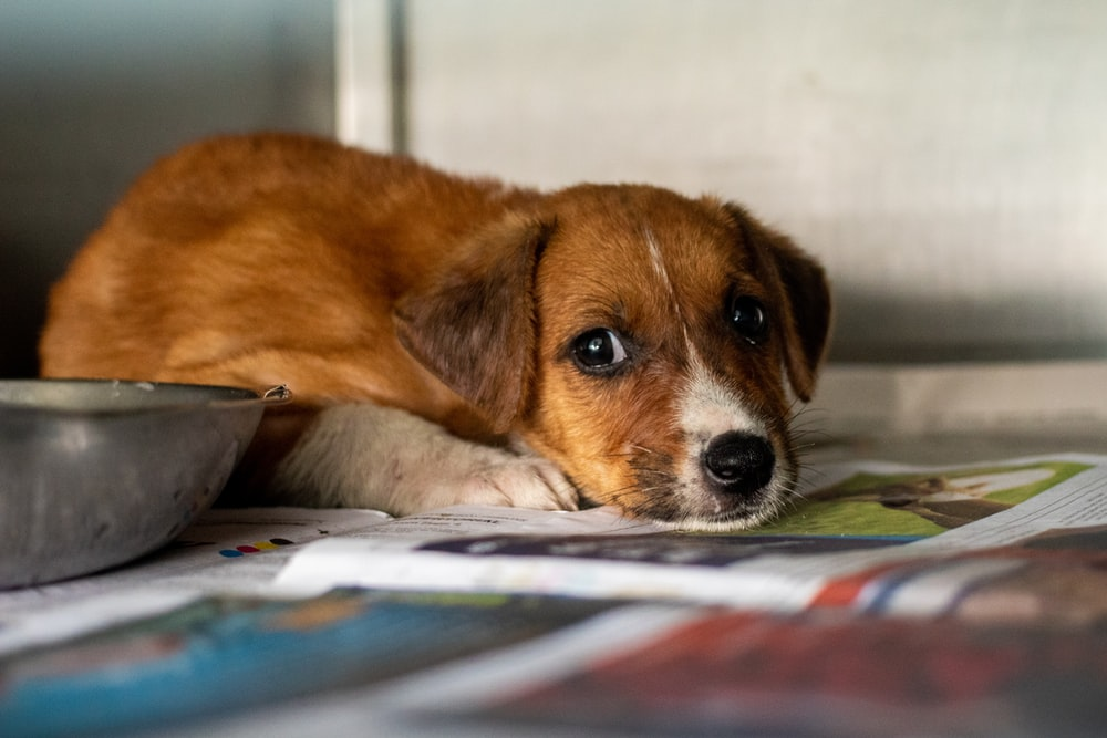 puppy lying on magazine beside food bowl
