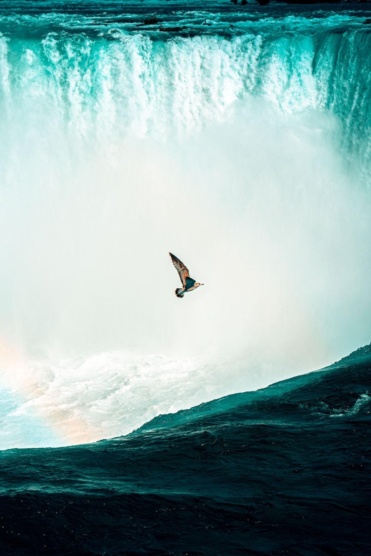 bird flying near Niagara Falls