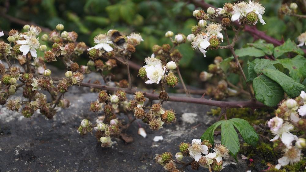 white petaled flowers at daytime