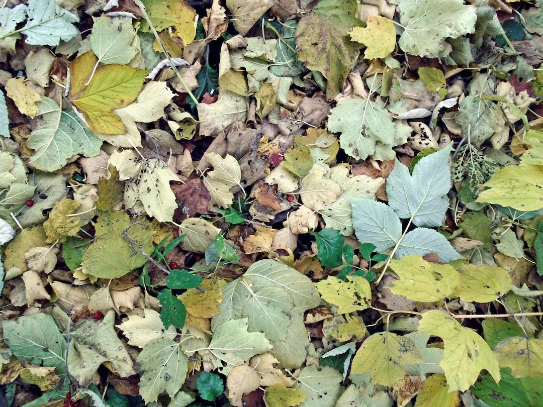 Fallen viburnum leaves on ground