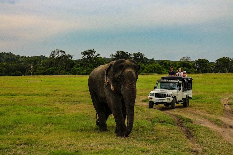A safari ride