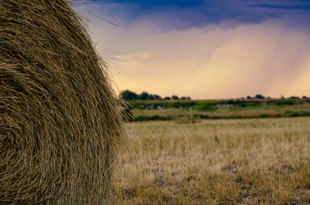 pile of brown hay during daytime
