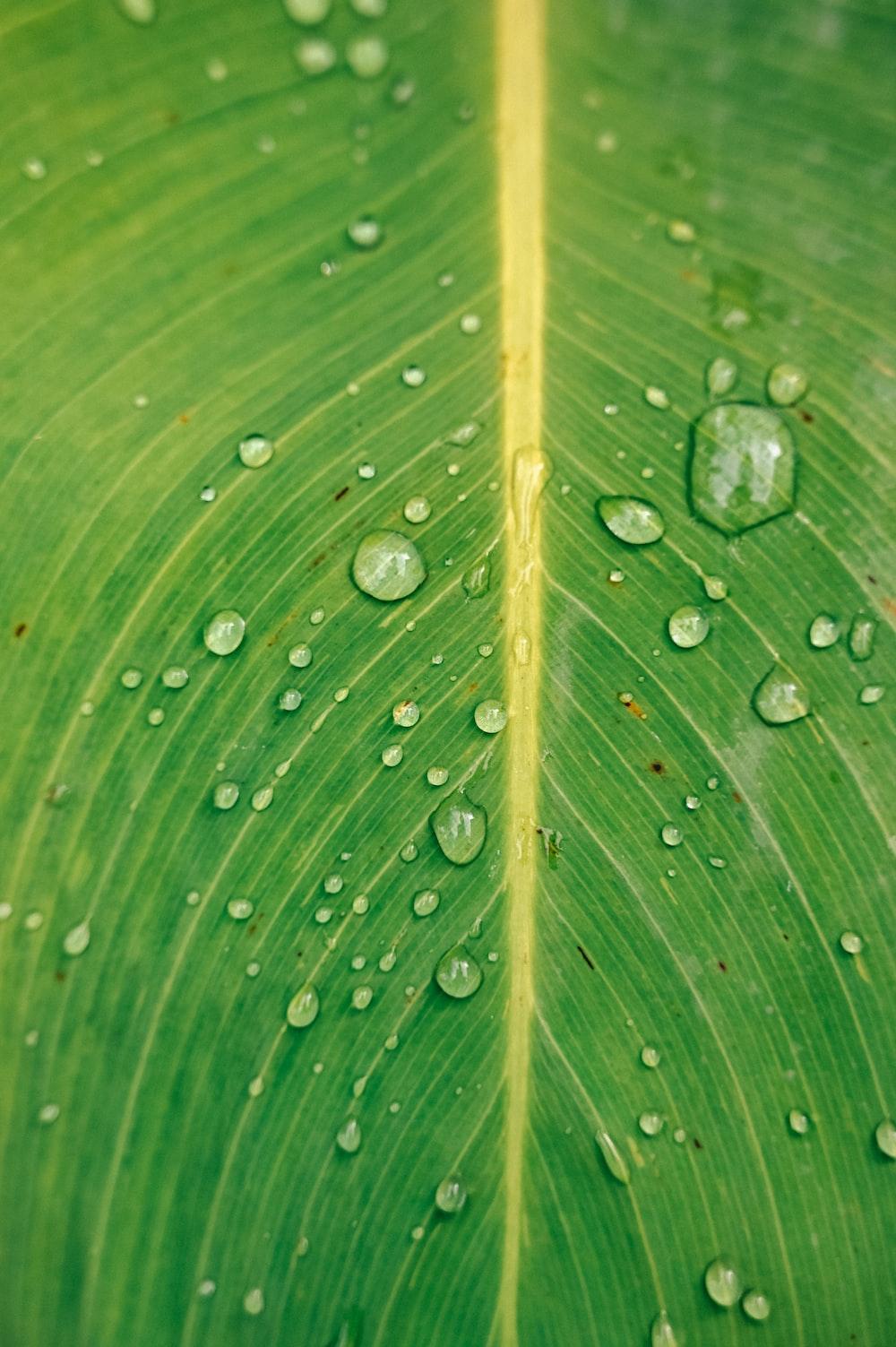 dewdrop on green leafed plant