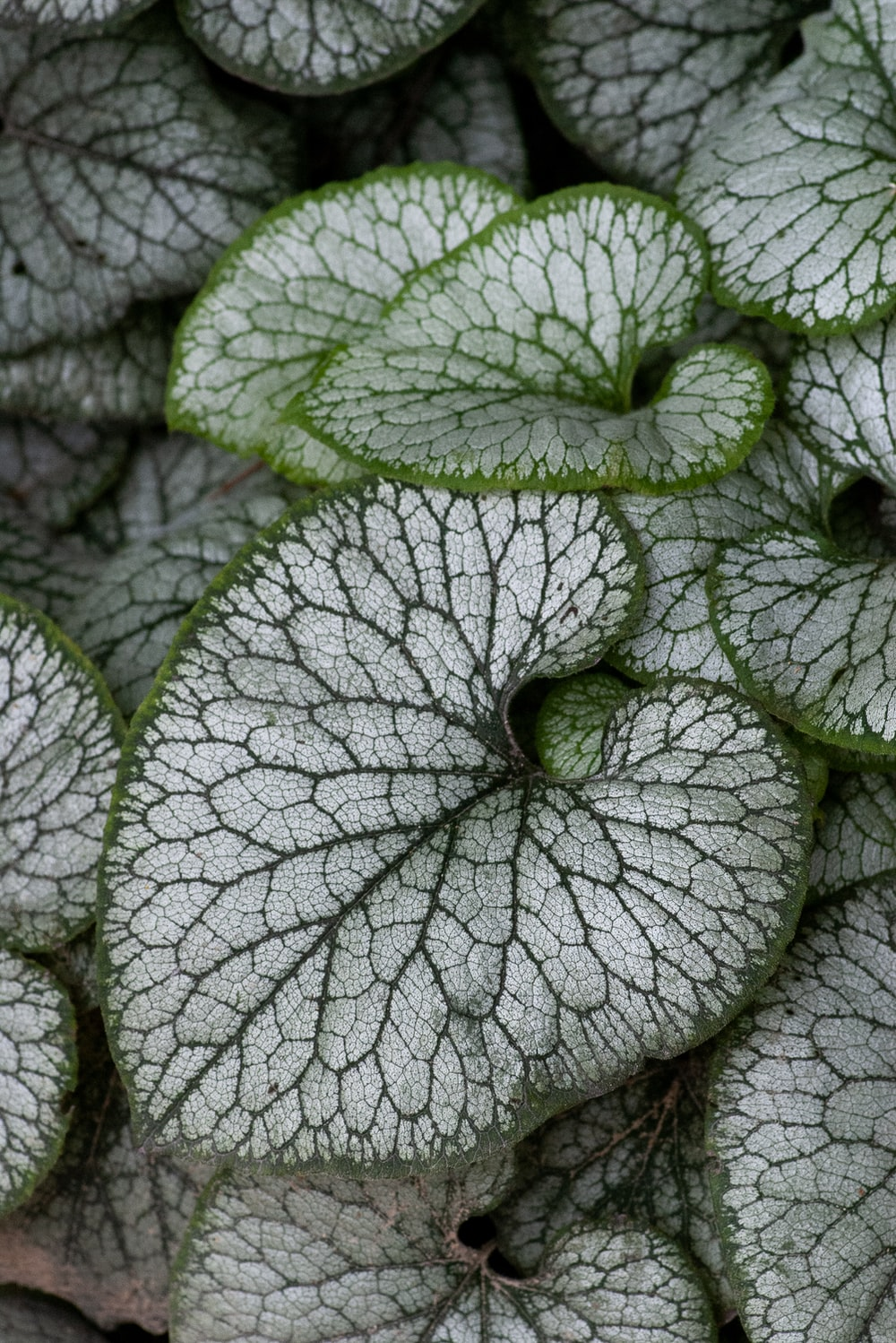 shallow focus photo of green and gray leaves