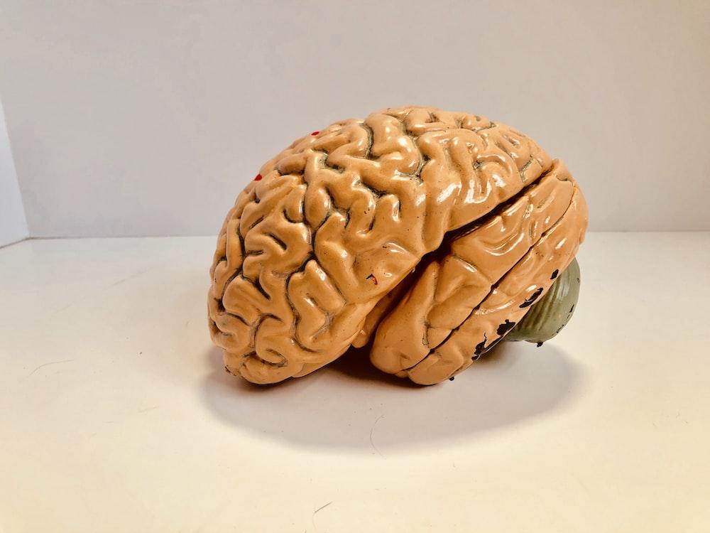 human brain figurine