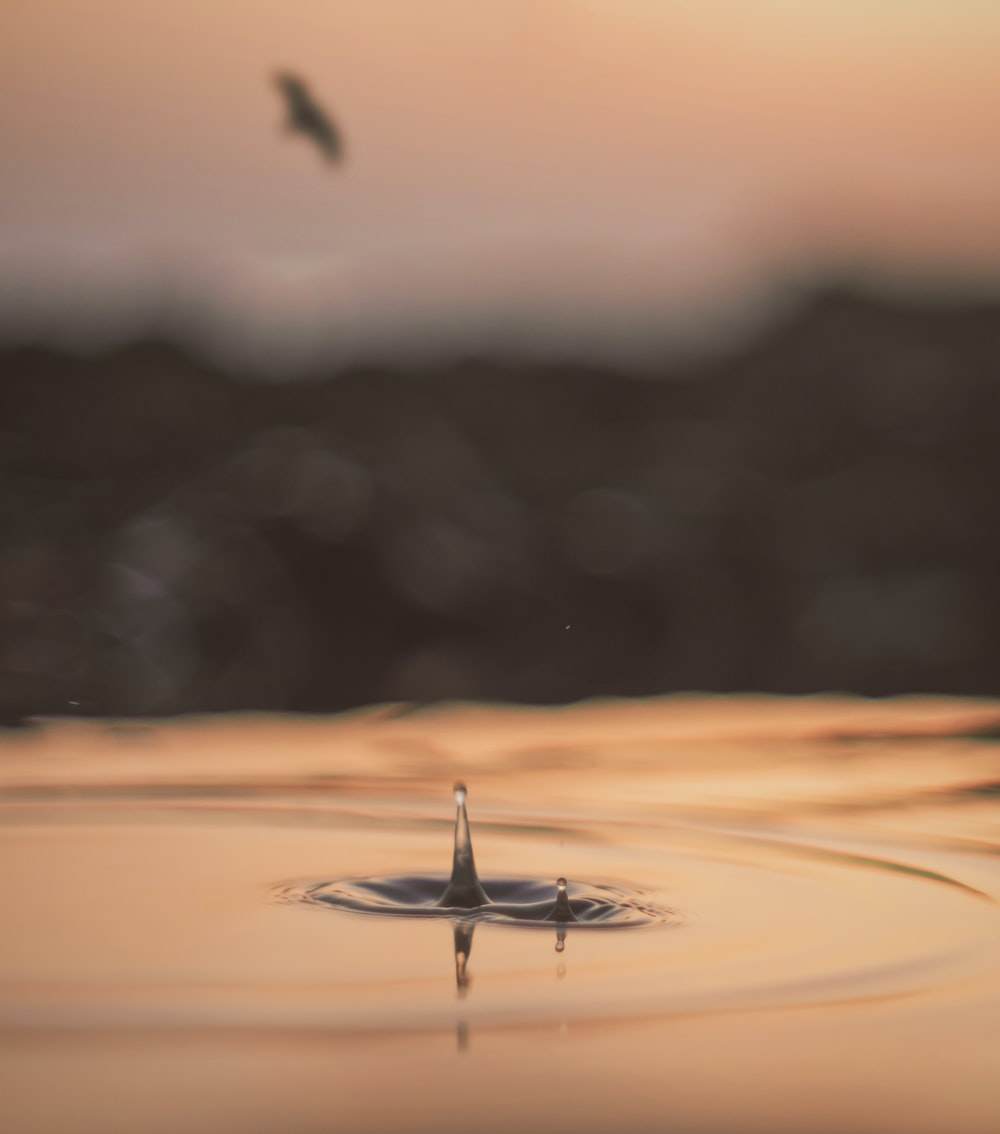 water drop on calm water