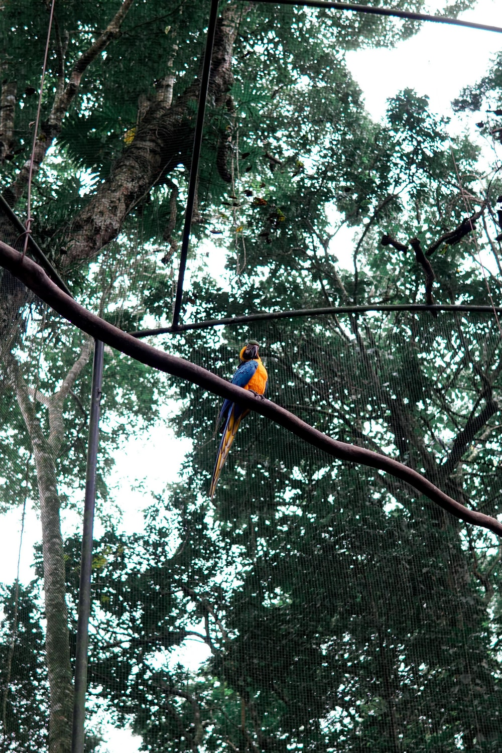 blue and yellow parrot on brown tree branch