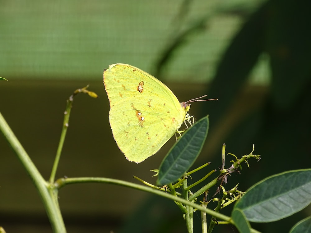 closeup photo of butterfly perching of plant