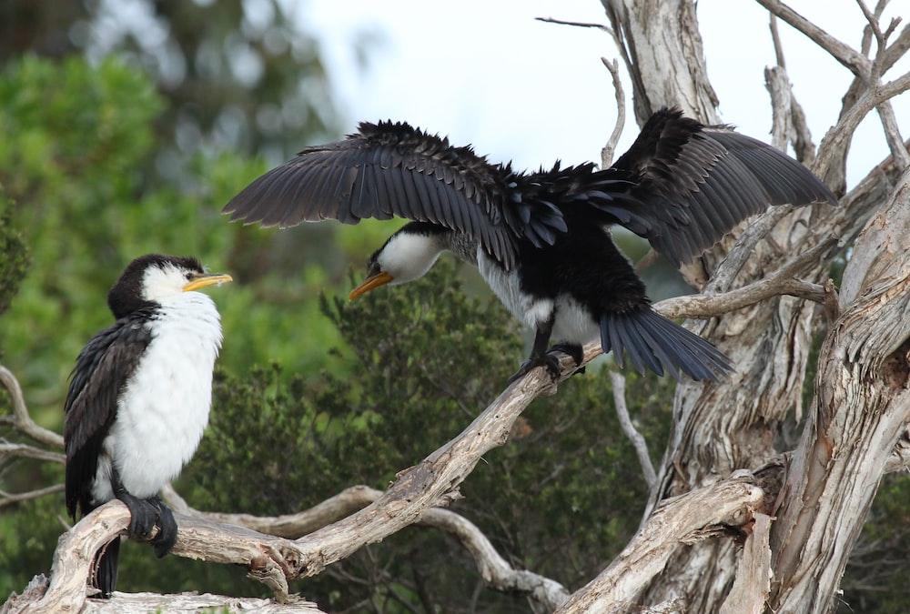 osprey birds on branch of tree