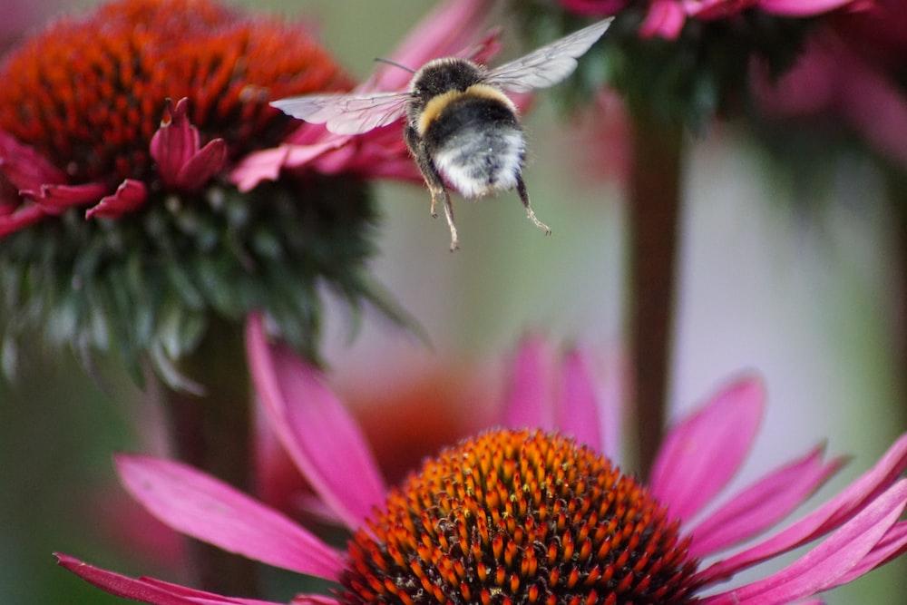 closeup photo of bee flying