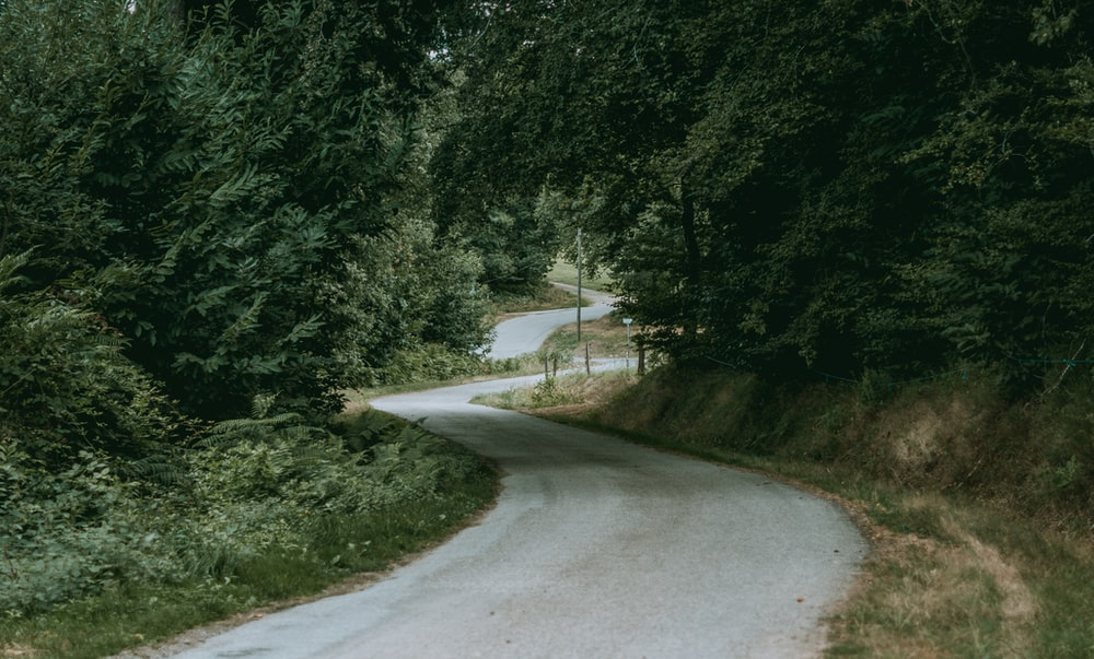 dirt road beside grass and trees during day