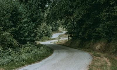road under trees