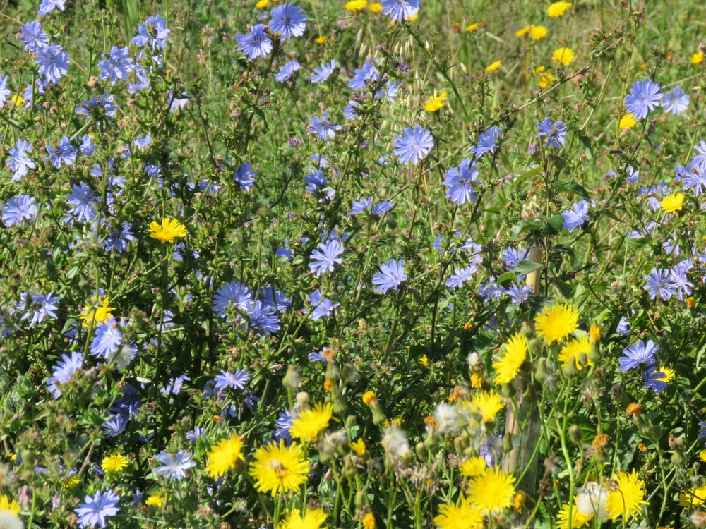 yellow and blue petaled flower field