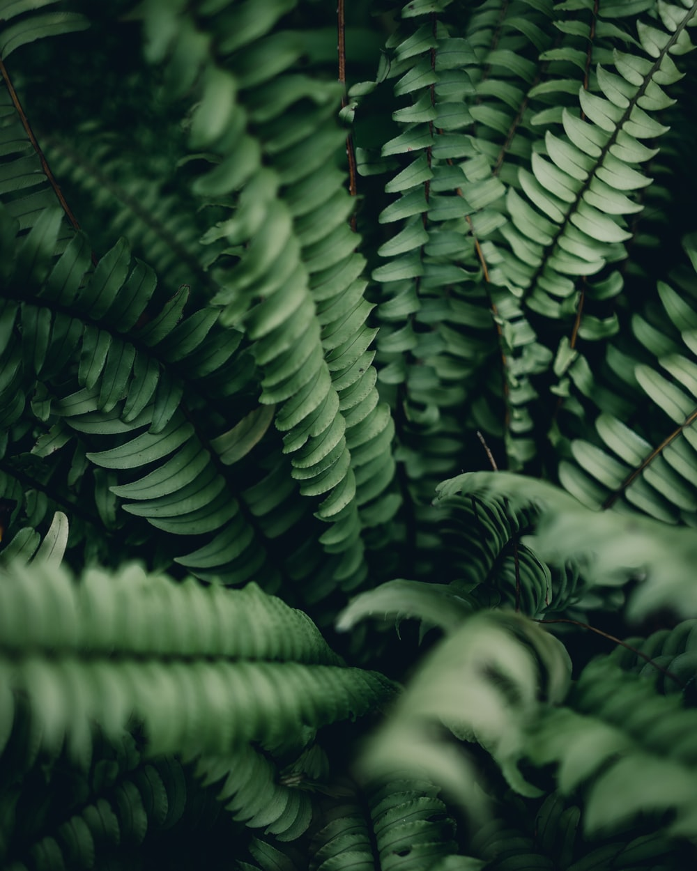 green fern plant in close-up photo