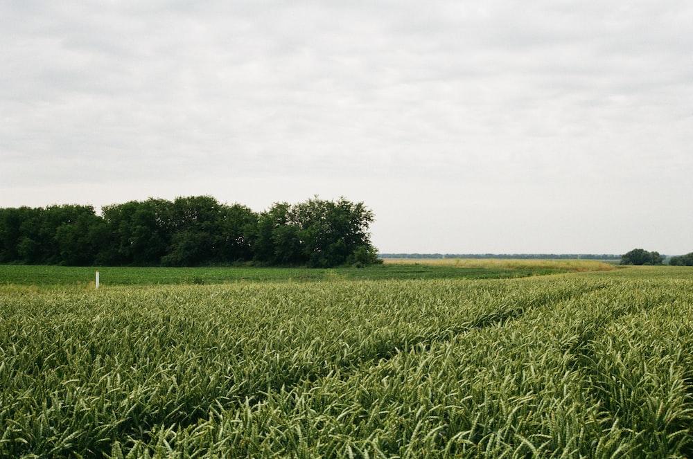 green field under white skies during daytime