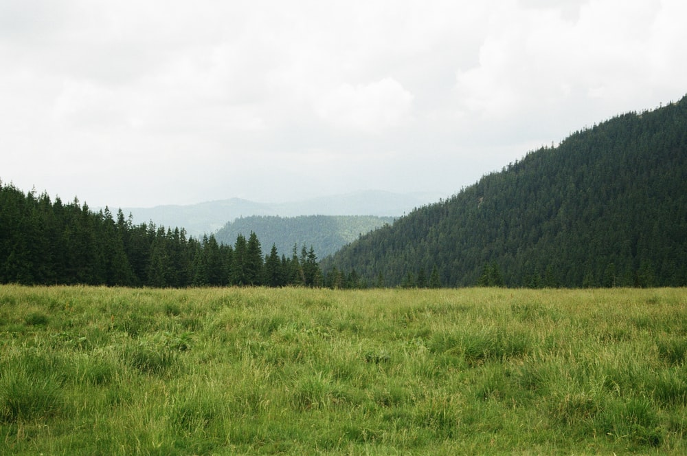 mountain covered with green leafed trees