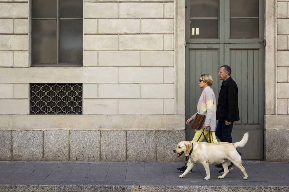 man and woman walking with Labrador retriever in front of closed door