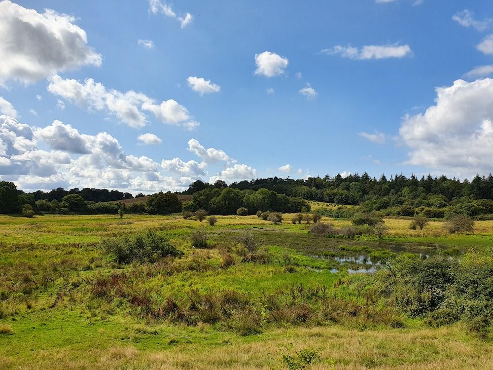 green pasture under blue sky