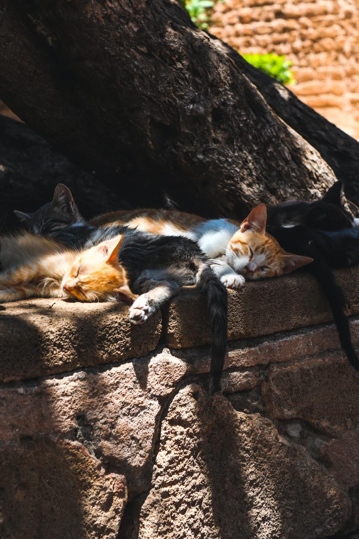 orange and brown tabby kittens sleeping