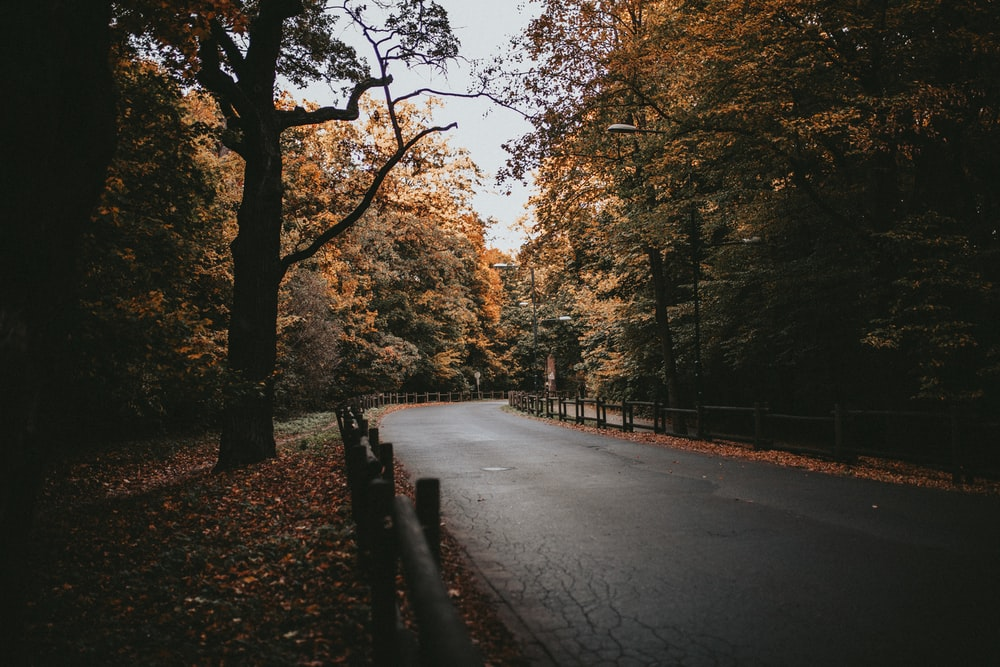 empty road by trees during daytime