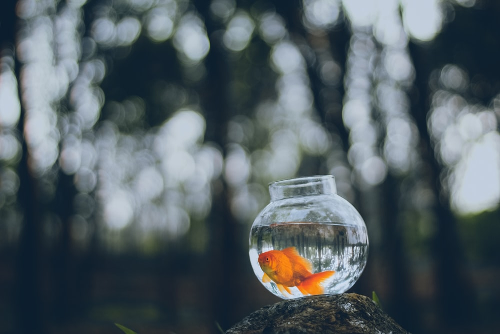 How To Keep Pet Fish Alive