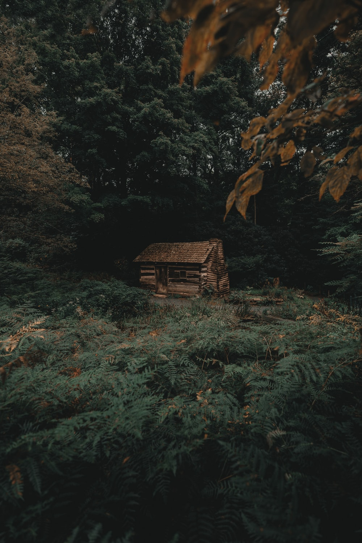 house near trees