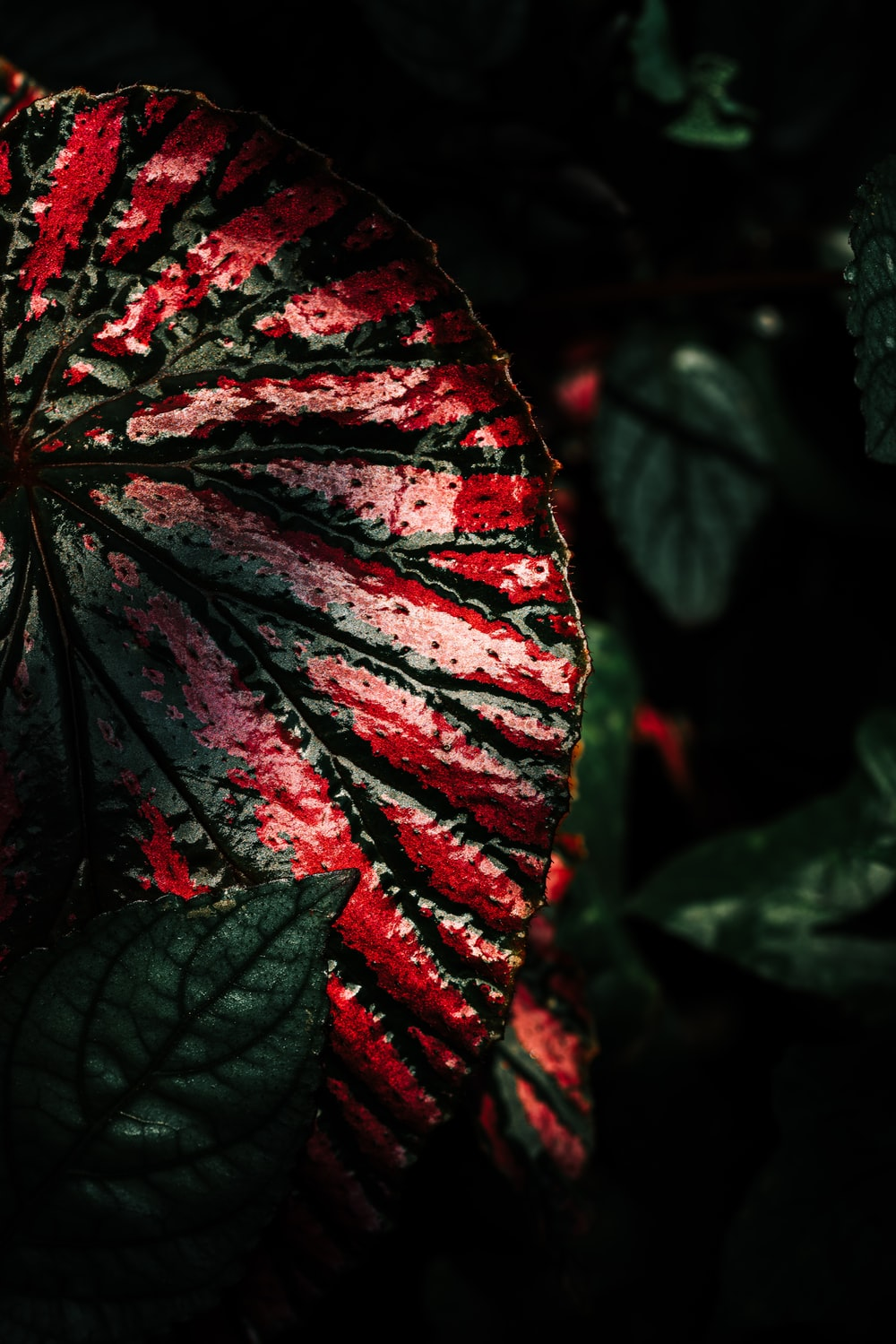 close view of red and green plant