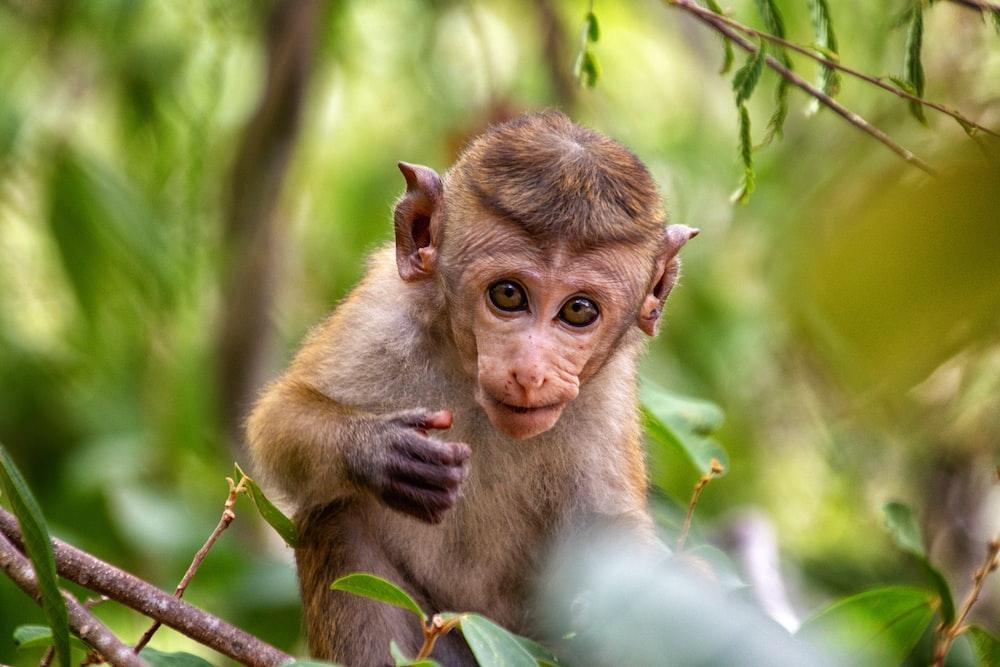 brown monkey near green leafed plant