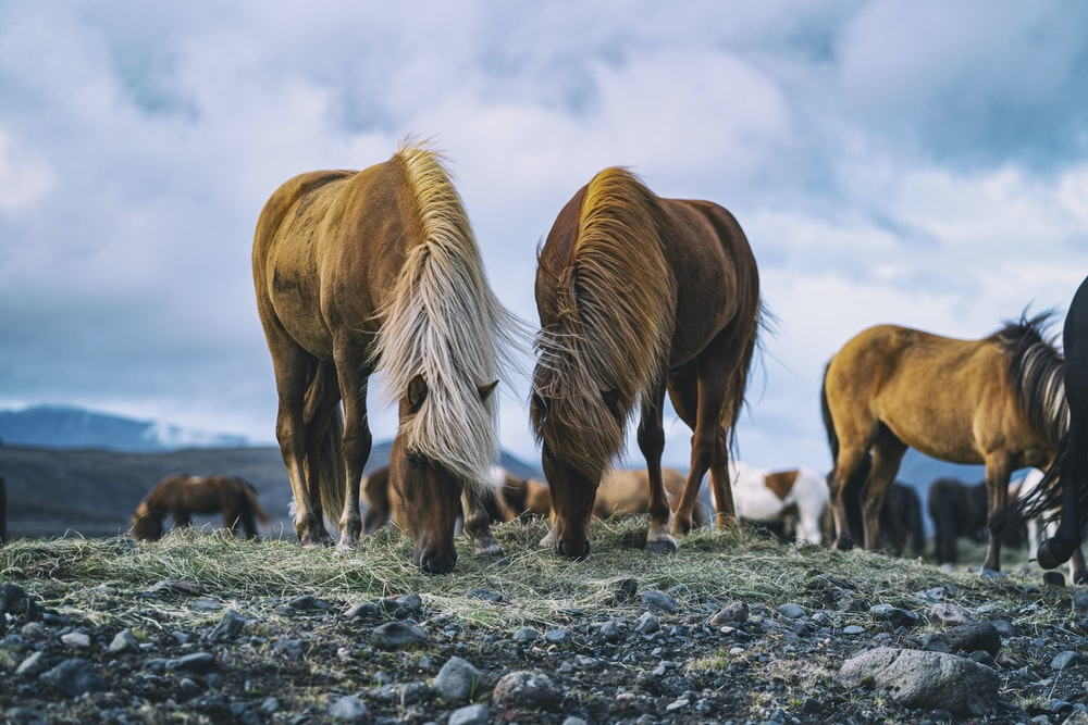 brown horses during daytime