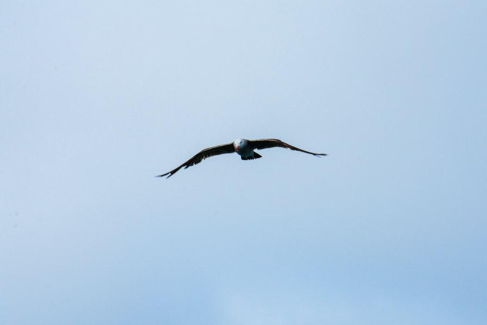 bald eagle flying during daytime