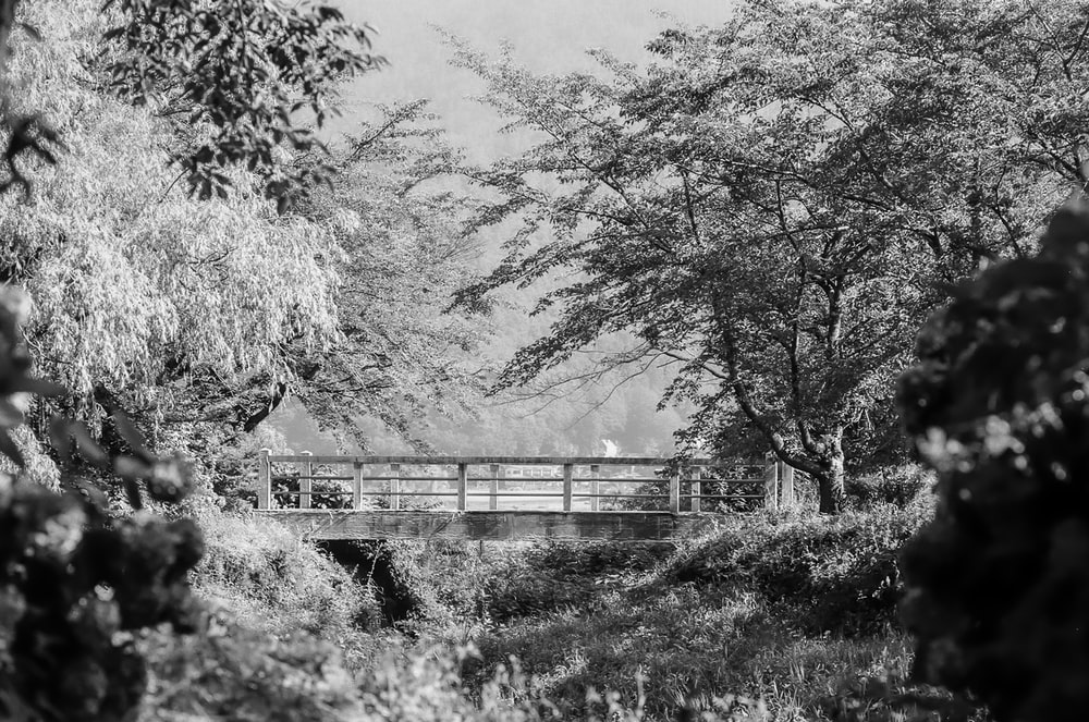 grayscale photography of bridge with trees