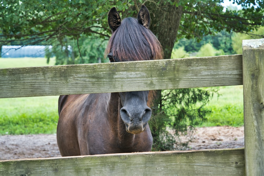 brown horse photography
