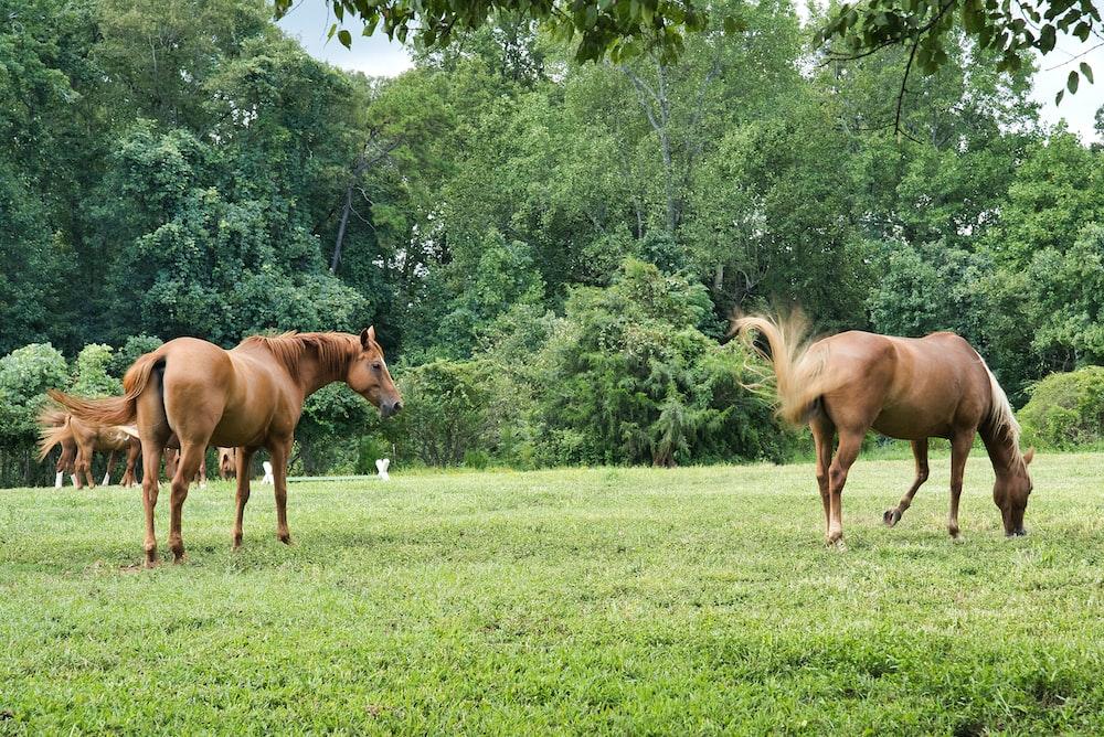 horses in yarn