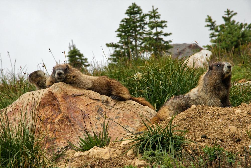 animals on hill