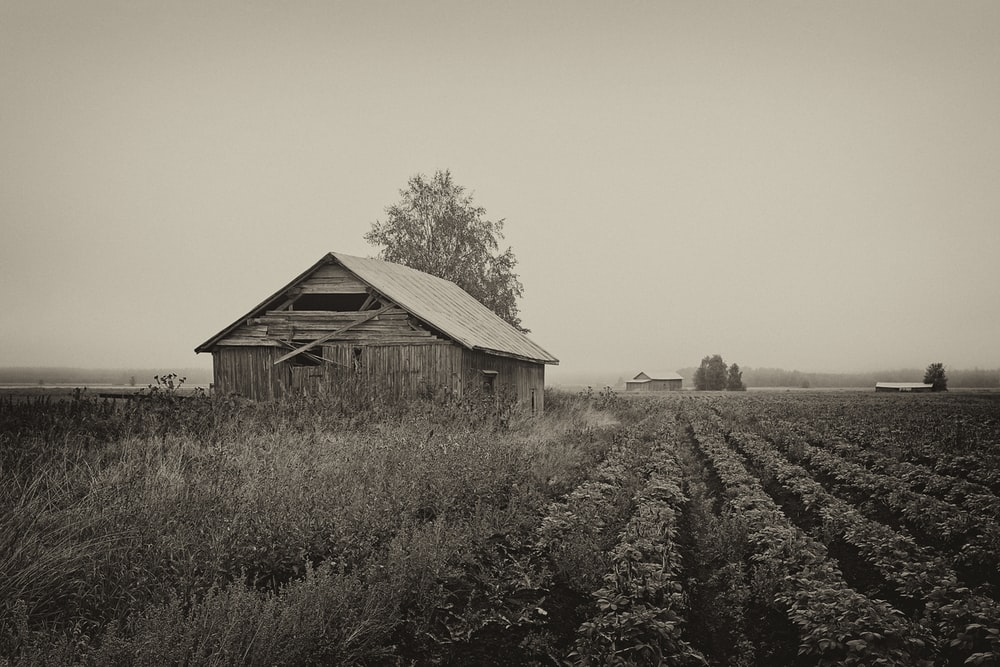 brown shed on farm